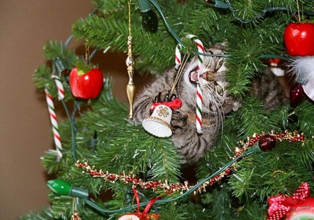 decorating-cats-destroying-trees-christmas-60__6051